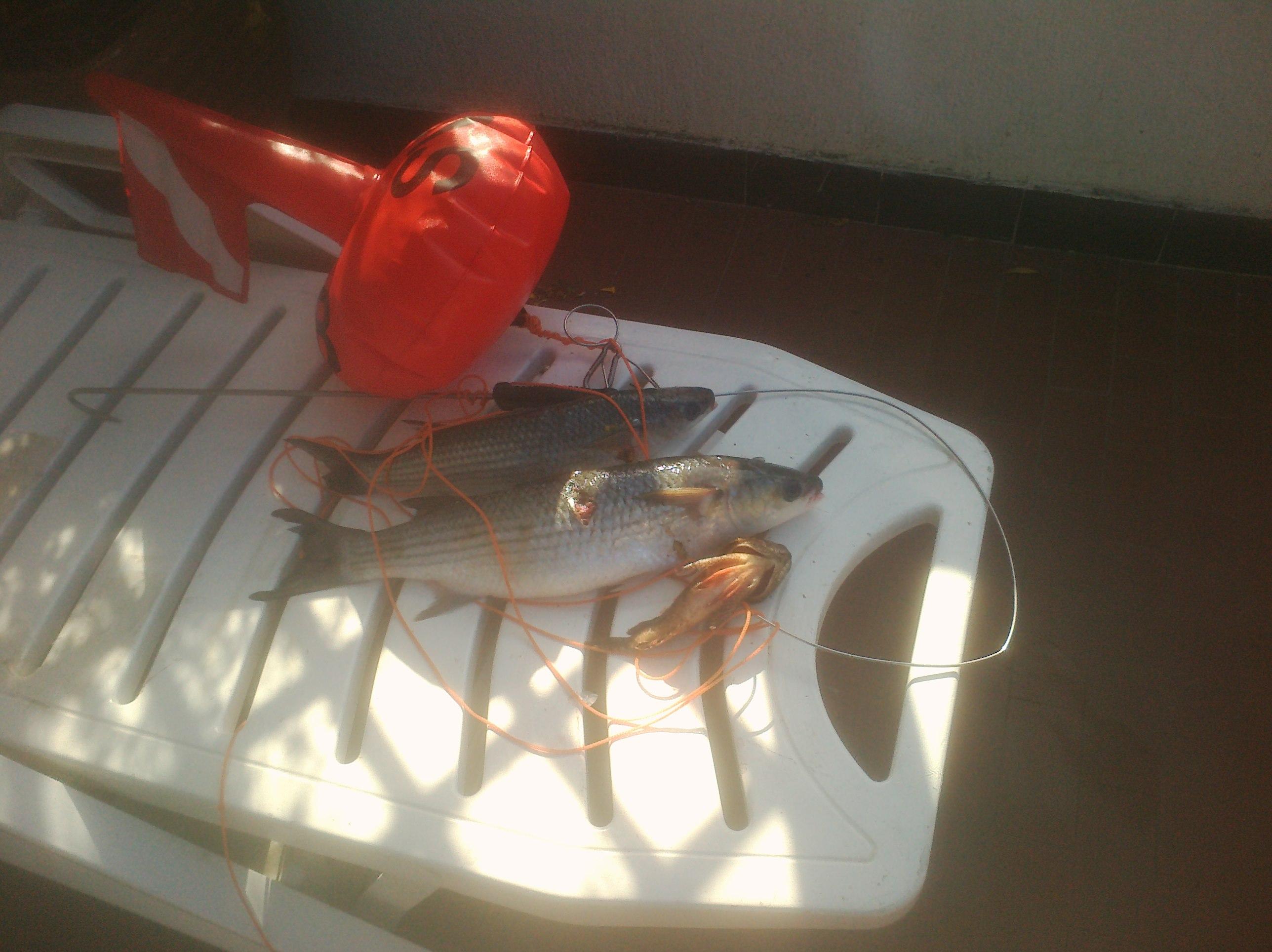 bella pescata marzo